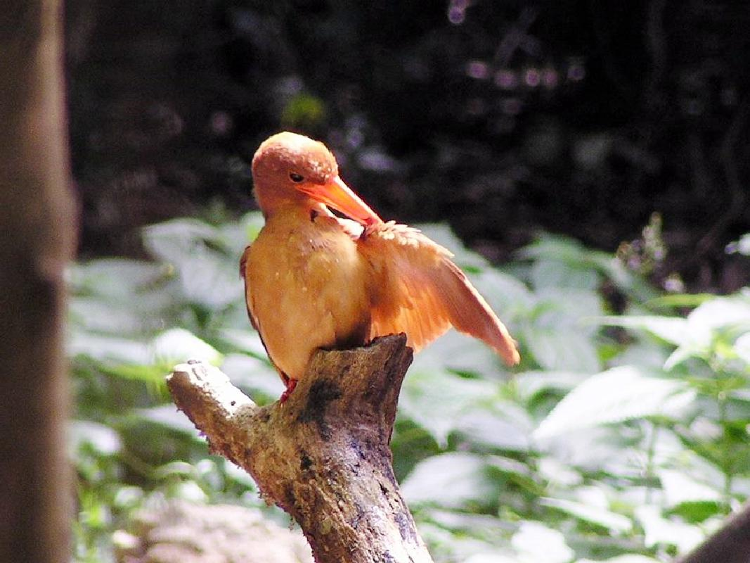 うぷきの森探検 宮古島最大の森のネイチャーツアー<早朝・午前・ナイトツアーの選べる3コース/宮古島>